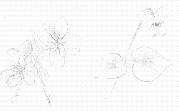 apple blossom (left) and white violet